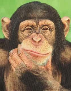 lens17616343_1297174218chimpanzee_thinking_poste