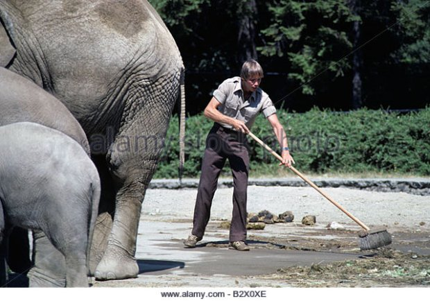 zoo-keeper-sweeping-up-elephant-mess-at-the-woodland-park-zoo-seattle-b2x0xe