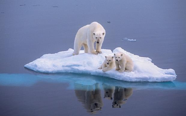 polar-bear-global-_3339474b
